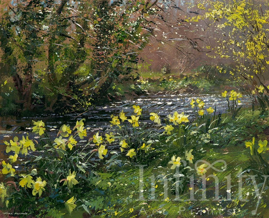 Daffodils and Forsythia, River Lathkill