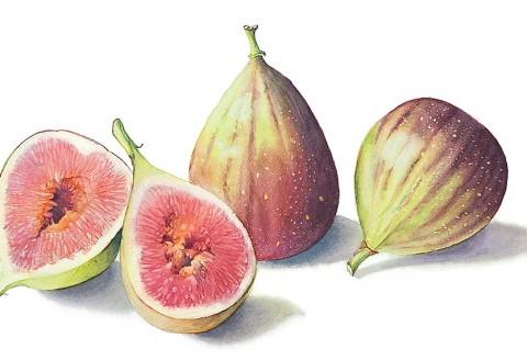 Figs by Cheryl Wilbraham