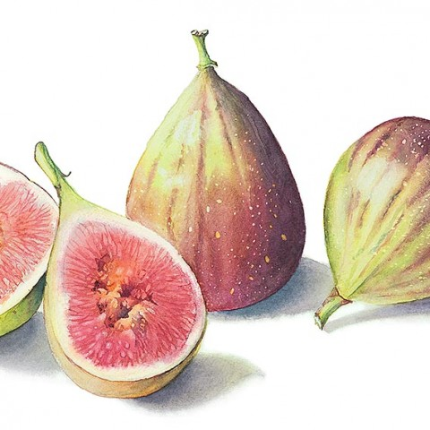Figs by Cheryl Wilbraham
